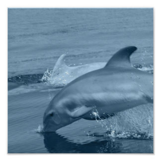 Dolphin Poster Print