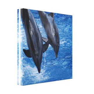 Dolphin Show Canvas Print