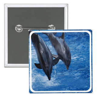Dolphin Show Pin