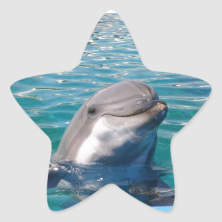 Dolphin Smile Star Sticker