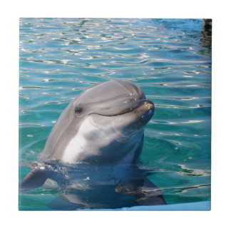 Dolphin Smile Tile