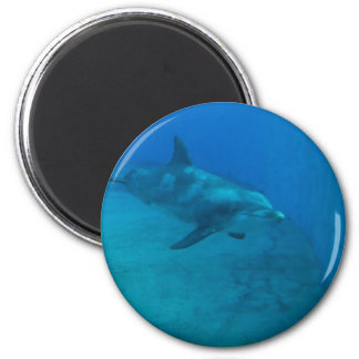 Dolphin Smiles Magnet