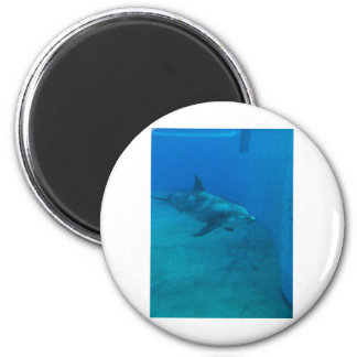Dolphin Smiles Refrigerator Magnet