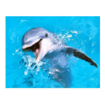 Dolphin Smiling 2 Postcard