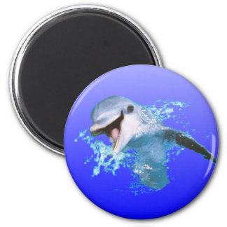 Dolphin Smiling Fridge Magnets