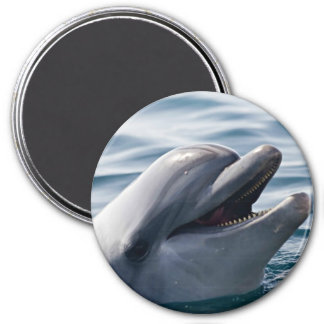 Dolphin Smiling Magnet