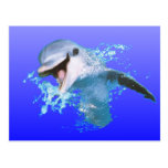Dolphin Smiling Postcard