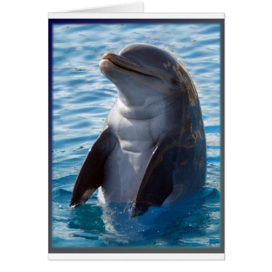 dolphin stand card