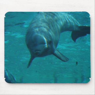 Dolphin Star Mouse Pad