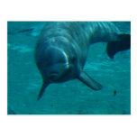 Dolphin Star Postcard