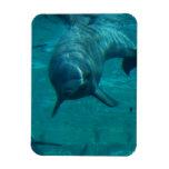 Dolphin Star Premium Magnet Flexible Magnets
