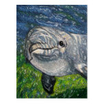 Dolphin Swimming Under Water: Dappled Sunlight Postcard
