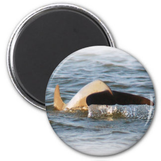Dolphin Tail Refrigerator Magnets