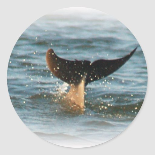 Dolphin Tail up Classic Round Sticker