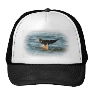 Dolphin Tail up Mesh Hats