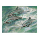 Dolphin Trio - postcard