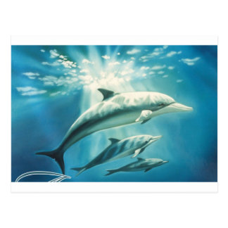 Dolphin Trio Postcard