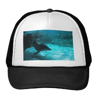 Dolphin Under Water Trucker Hat