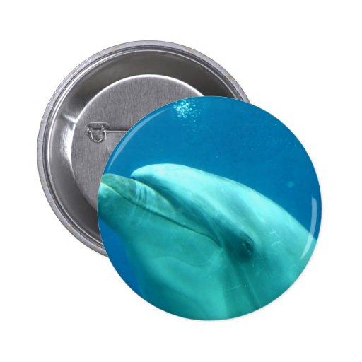 Dolphin Underwater Pinback Buttons