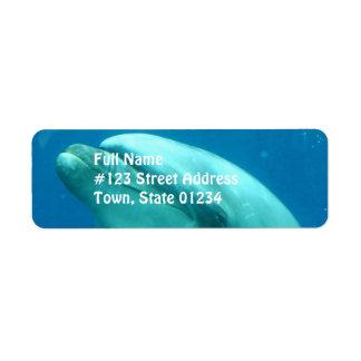 Dolphin Underwater Label