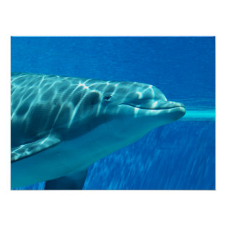 Dolphin Underwater Print