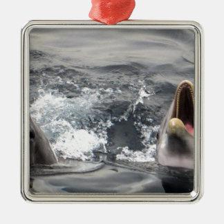 dolphin wave water tropical dive swim Aquatic Life Metal Ornament