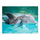 Dolphin with calf postcard