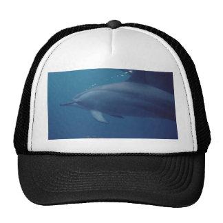 Dolphins 022 trucker hat