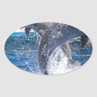 Dolphins 2 oval sticker