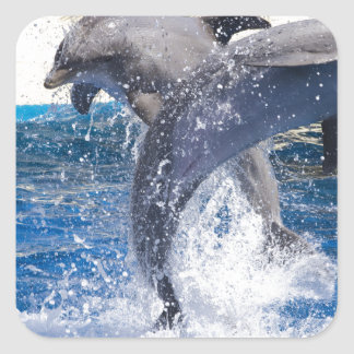 Dolphins 2 square sticker