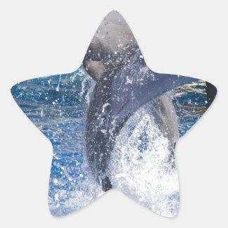 Dolphins 2 star sticker