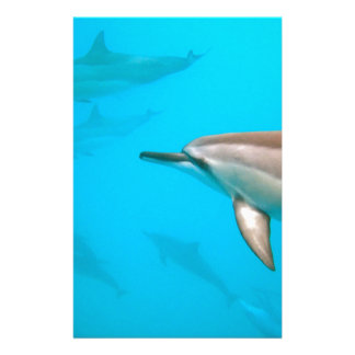 Dolphins and Hawaii Stationery