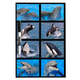 Dolphins and killer whales Dry-Erase board