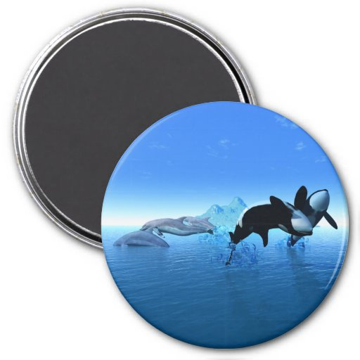 Dolphins and Orca's Magnet