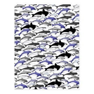 Dolphins and Orcas Swimming Pattern Postcard