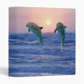 Dolphins at sunrise binder