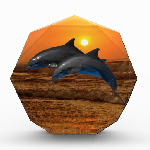 Dolphins at sunset awards