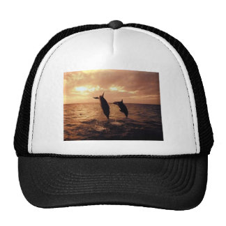 Dolphins At Sunset Mesh Hat