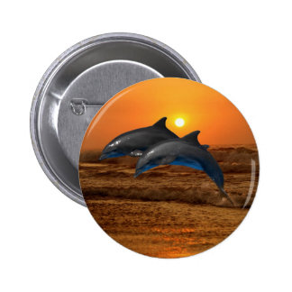 Dolphins at sunset pinback button