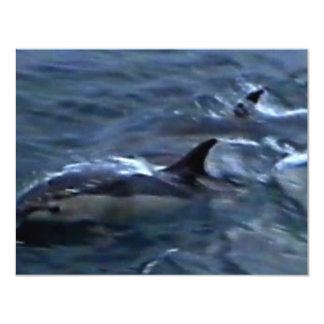 Dolphins at the boatside 4.25x5.5 paper invitation card