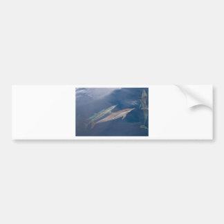 Dolphins Car Bumper Sticker