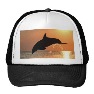 Dolphins by Sunset Trucker Hats