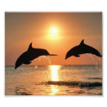 Dolphins by Sunset Photograph