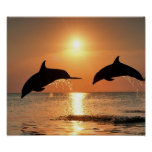 Dolphins by Sunset Posters