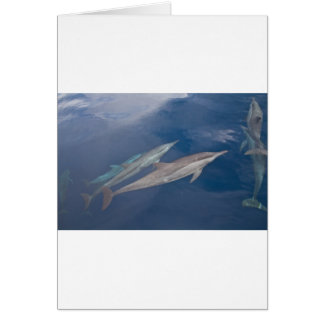 Dolphins Cards