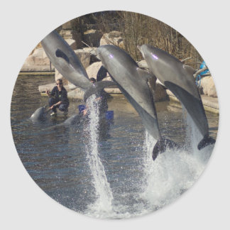 Dolphins Classic Round Sticker