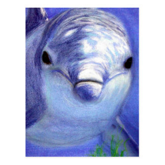 Dolphins Drawing Blue Dolphin Underwater Picture Postcard