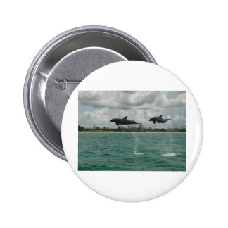 dolphins flying in the seas pinback button