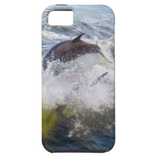 Dolphins Followings Boat iPhone SE/5/5s Case