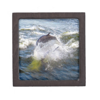 Dolphins Followings Boat Jewelry Box